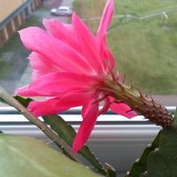 Nowy kaktusik:-)