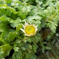 Październikowy kwiat wita :)