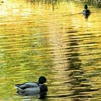 Pływające w złocie...