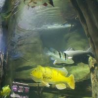 TA żółta ryba mi się spodobała