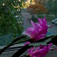 Za oknem jesień .....