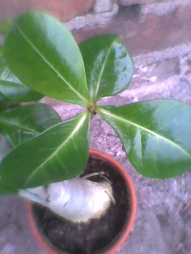 Zielone i błyszczące liście