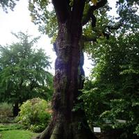 drzewko .......