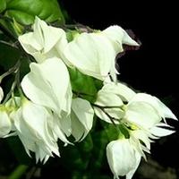 Elegancja w bieli:)