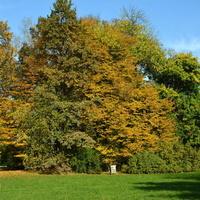 Jesienią w parku
