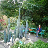Kaktusy .......