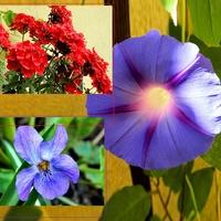 Kwiatki na