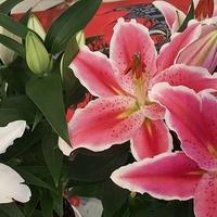 kwitną i pachną .....