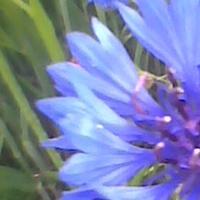 NAJbardziej niebieski