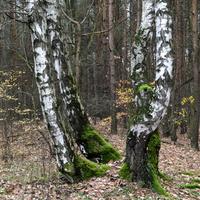 Niespodzianka w lesie