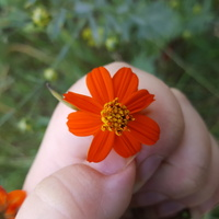 Odkryłam kwiaty łąkowe
