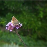 Patagonka z motylkiem...