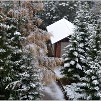 Pierwszy śnieg ...