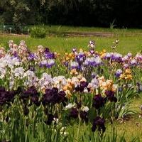 Różnokolorowe kwiaty w ogrodzie botanicznym.