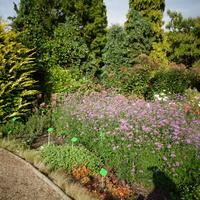 Ulubiony ogród