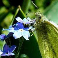Wiosenne błękity:)
