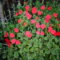 wrześniowe kwiaty