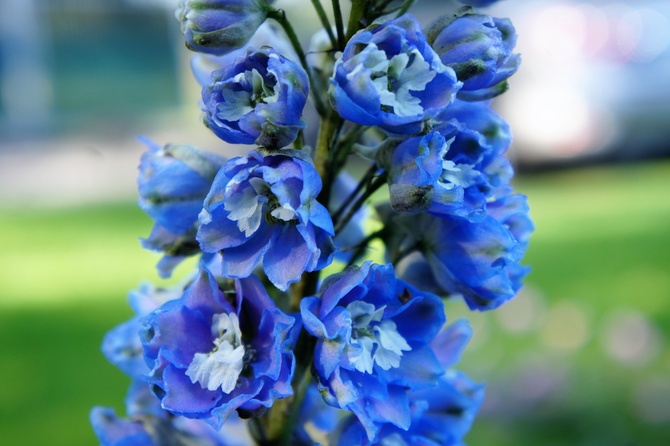 Letni błękit