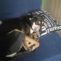 Czarek polubił moją poduszkę