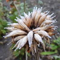 Czas zimowych dekoracji