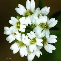 biały kwiat z zielonym środkiem