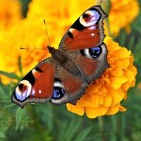 Motyle w lecie