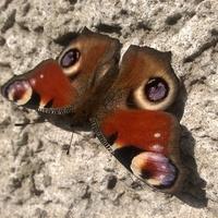 Na koniec dodaję motylka...