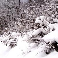 21 I   Światowy Dzień Śniegu