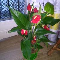Bardzo obficie kwitnie
