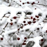 Dzisiaj obchodzimy Światowy Dzień Śniegu