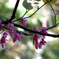 Egzotyczne kwiatki