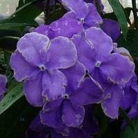 Egzotyczny kwiat niebieski