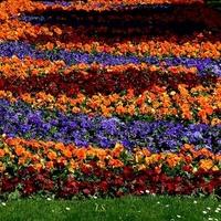 Kolorowy dywan kwiatowy, fragment