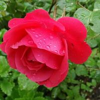Snów intensywnie różowych :)