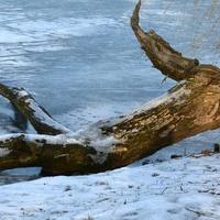 Uroki zimy w parku