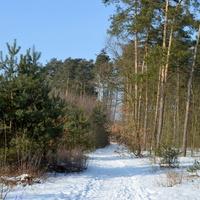 W lesie zimą