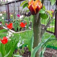 Wiosenny  bukiecik dla Was.......