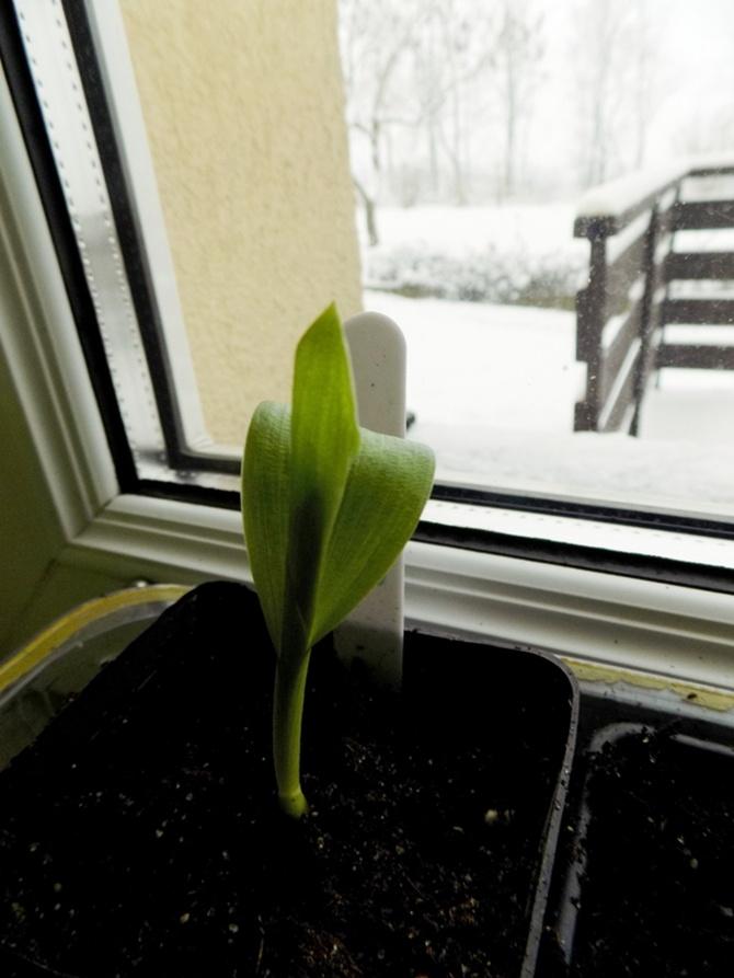 Przyspieszam wiosnę :)