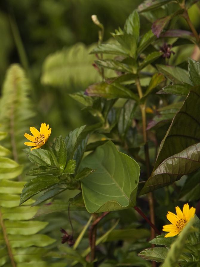Roślinność borneańskiego buszu