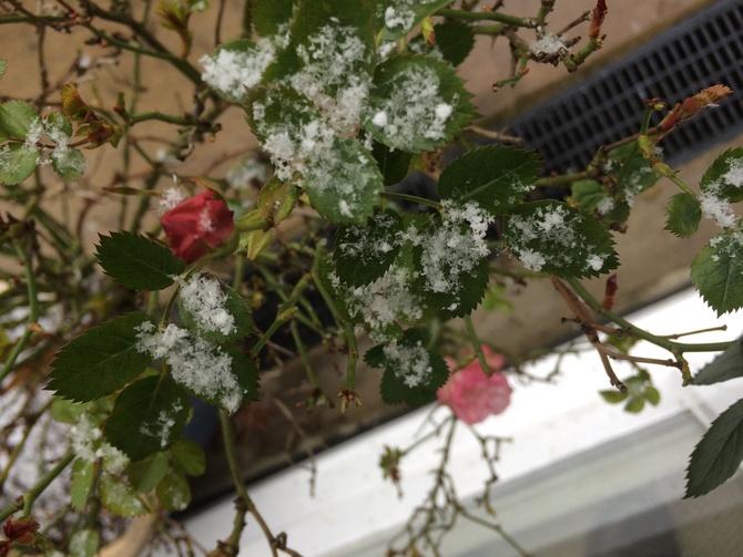 Wiosna goni zime..