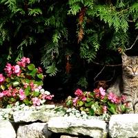 Dzisiaj koty mają swoje święto :)))