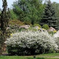 Krzewy kwitnące w ogrodzie botanicznym.