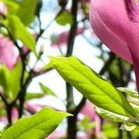 Różowo, zielono - wiosennie...