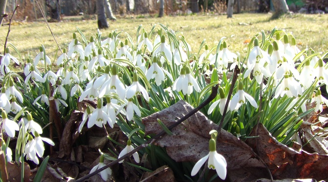 Wiosna  ,wiosna , wiosna !