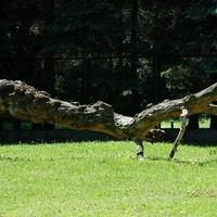 Ciekawostka przyrodnicza w parku