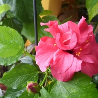 Dziś na różowo