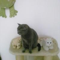 Gabcia w towarzystwie psa i kota:):):)