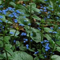 Niebieskie kwiatki.