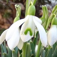 Puk, puk, to ja wiosna :)