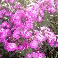 Różowych snów :))